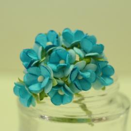 Декоративни цветенца - мини, синьозелени