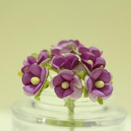 Декоративни цветенца - мини, лилави