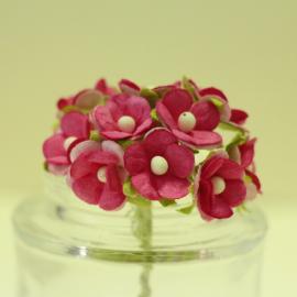 Декоративни цветенца - мини, цикламени