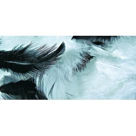 Пера - бяло и черно